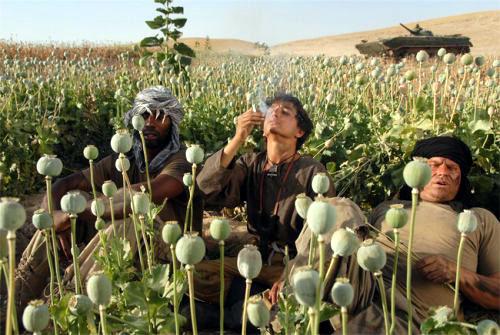 Siddiq Barmak's Opium War